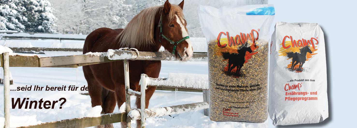 Pferd&Reiter
